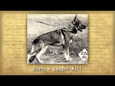 Tribute To The DDR Dogs