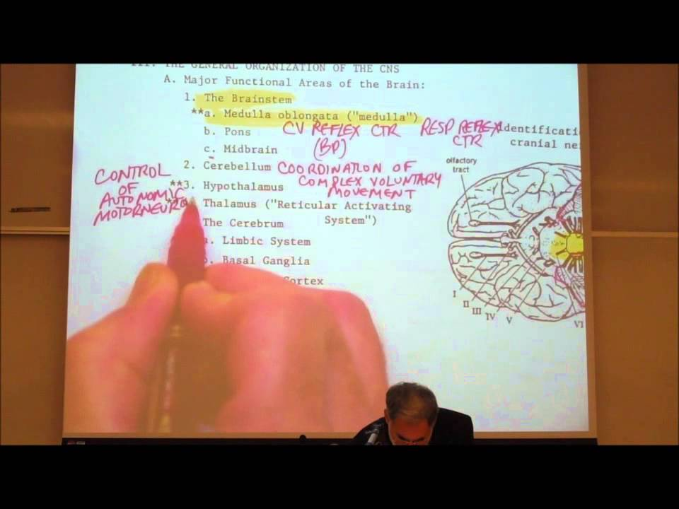 Nervous System Review by professor fink - YouTube