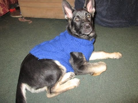 Como Hacer Sweater-Chaleco con 2 Agujas Para Tu Mascota - YouTube