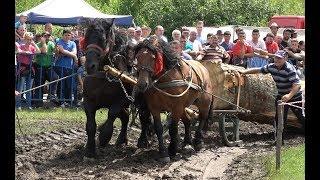 Concurs cu cai de tractiune , proba de dublu - Gilau, Cluj ,16 Iunie 2018