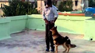 Dog Training, Maharashtra,india