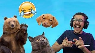 لقطات مضحكة للحيوانات ( رهيبين 😂😭 )