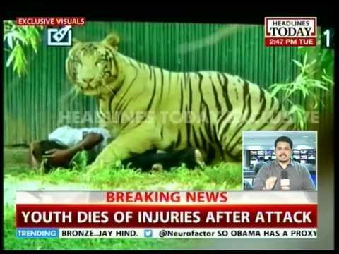 White Tiger of the Delhi Zoo kills a boy who fell into enclosure- Details