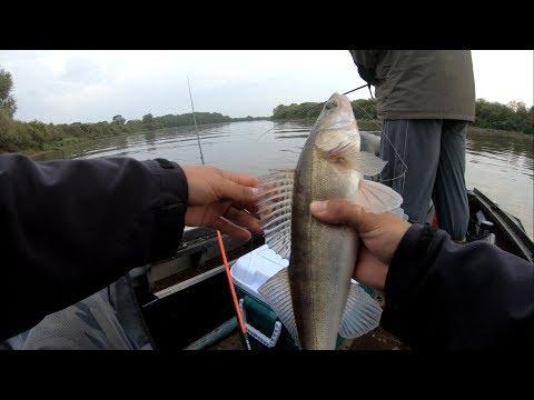 Джиговая рыбалка на реке Мста. Отлично отловились окунем,щукой и судаком 2018.