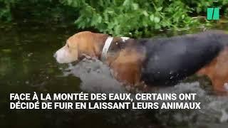 Ces chiens abandonnés pendant l'ouragan Florence échappent de peu à la noyade