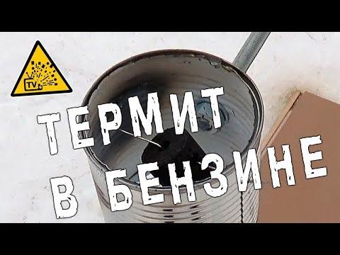 Вопрос: Как определить личинку термита?