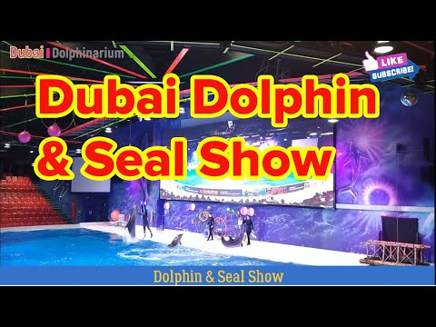 Dubai Dolphinarium – Dolphin & Seal Show
