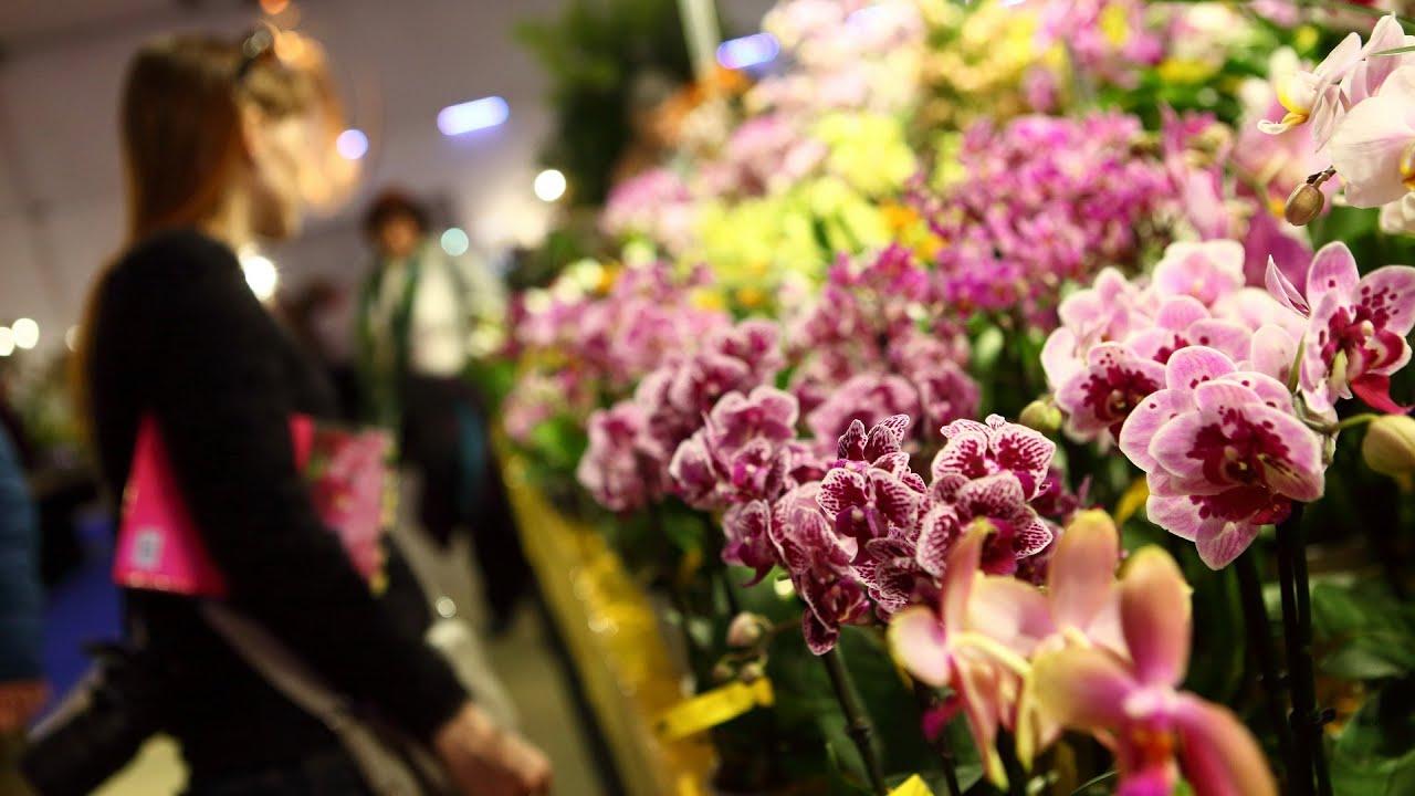 DRESDNER OSTERN 2018 - mit Internationaler Orchideenwelt
