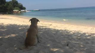 Magalawa Island - Masinloc, Zambales