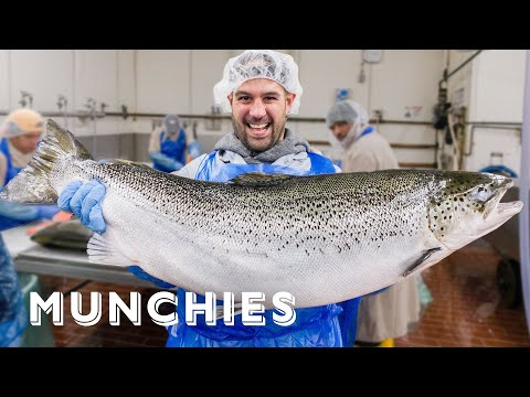 How 15 Million Pounds Of Smoked Fish Gets Made - A Frank Experience