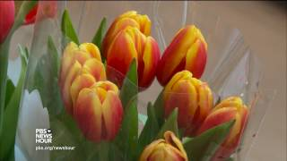 Celebrating spring with 10,000 tulips
