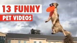 13 Funny Pets Video Compilation 2016