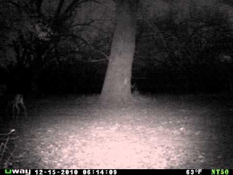 Odd trail camera pictures