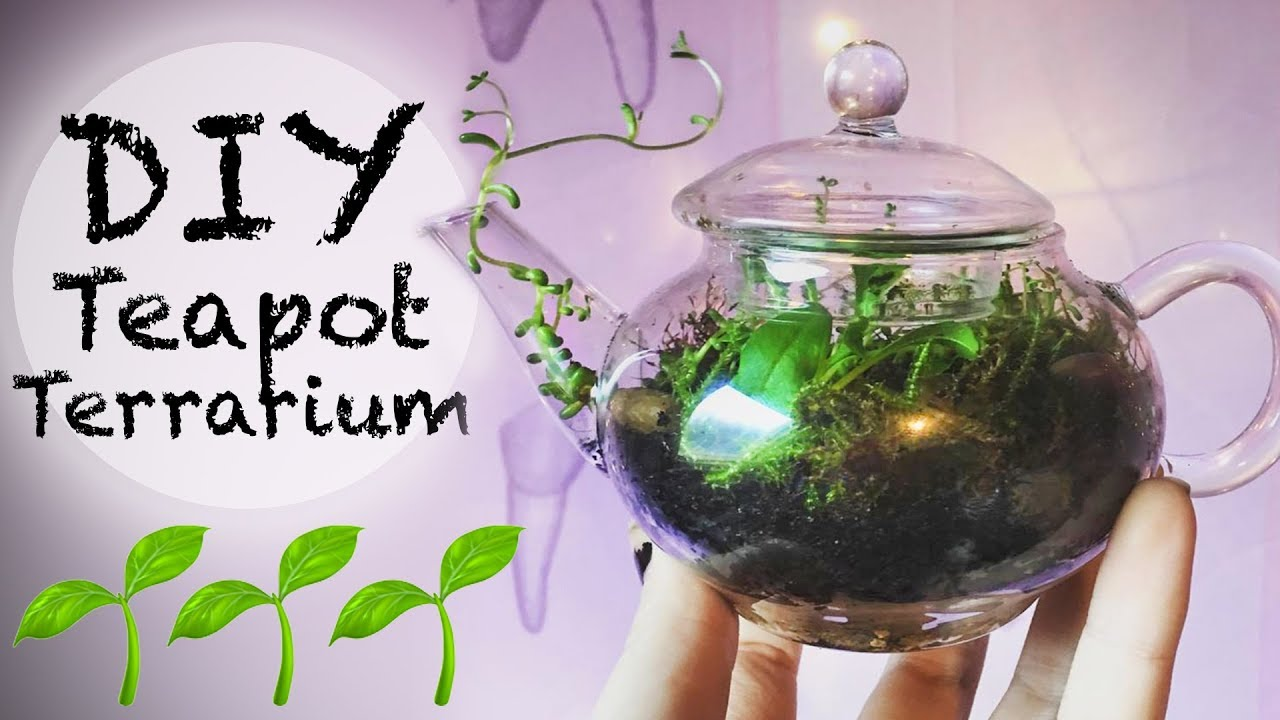 Diy Teapot Terrarium Easy Plant Care Toxic Tears Youtube