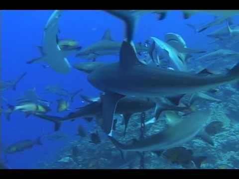 Shark Pass at Truk Lagoon