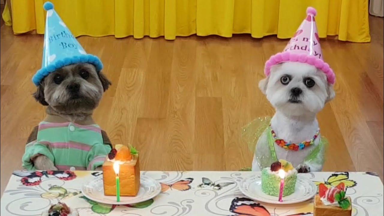 Bốn bé chó dể thương vui mừng  Sinh Nhật CJ & Eva/Four cute dogs are happy to Birthday of CJ & Eva
