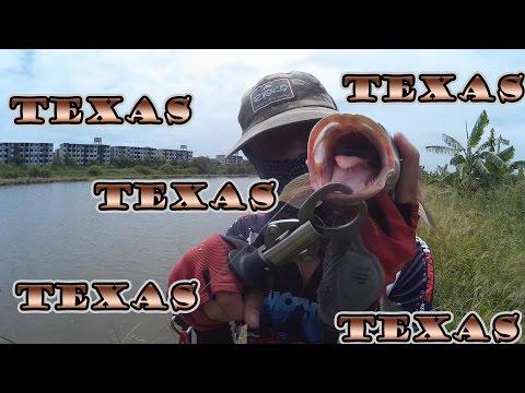 ตกปลาช่อนใหญ่ ด้วย texas # By แจ็ค 20