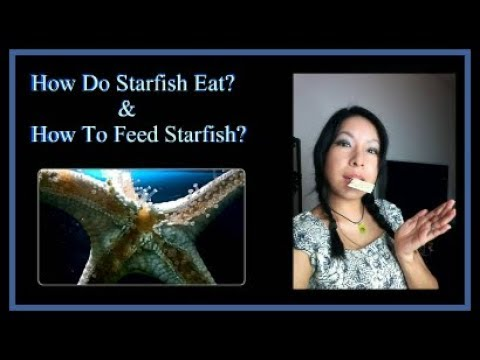 How Starfish Eat/ How To Feed