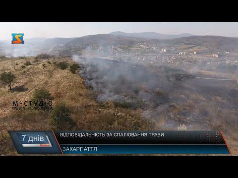 Відповідальність за спалювання трави