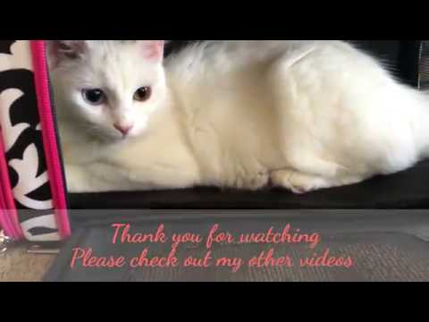 Cat Pet Carrier Soft-Sides Demask
