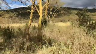 O nosorożcach na drzewach - Lake Nakuru National Park - Kenia- Afryka