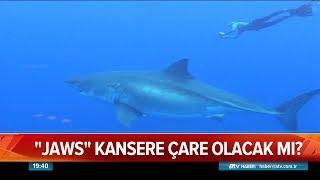 Jaws kansere çare olacak mı? - Atv Haber 20 Şubat 2019