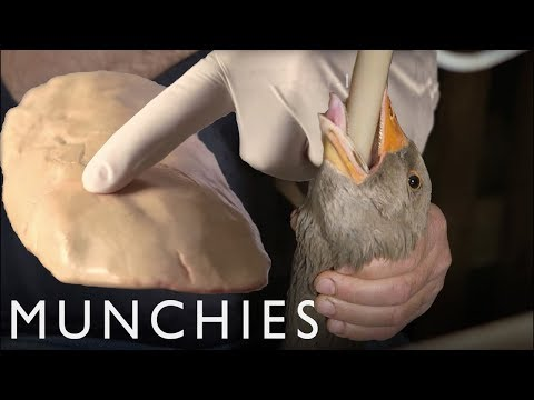 Foie Gras & the Ethics of Force-Feeding: The Politics of Foo
