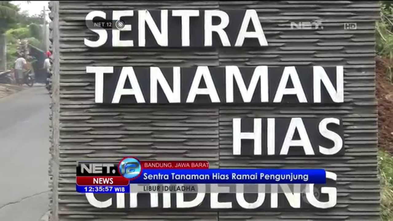 Sentra Bunga Dan Tanaman Hias Di Bandung Net12 Youtube