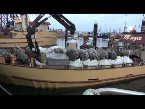 The Australian seafood Episode 4+5 Tuna