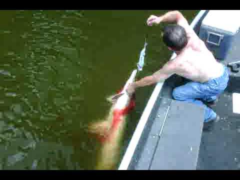 Gar fishing 2 50 pound alligator gar youtube for Jug line fishing