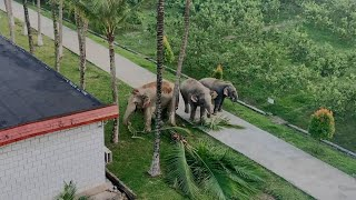 Three wild elephants venturing into police station in Yunnan, China