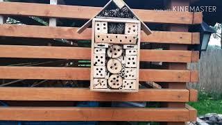 #32 Hotel dla owadów. Kiwi.