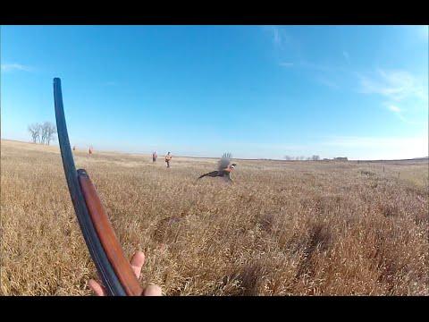 Best gopro south dakota pheasant hunting 2014 youtube for South dakota out of state fishing license