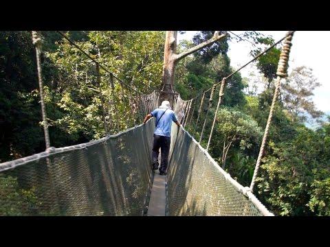高さ10階建て相当の吊り橋 キャノピーウォークボルネオ島Canopy Walk, Borneo Malaysia