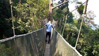 「高さ10階建て相当の吊り橋 キャノピーウォーク」ボルネオ島(Canopy Walk, Borneo) Malaysia