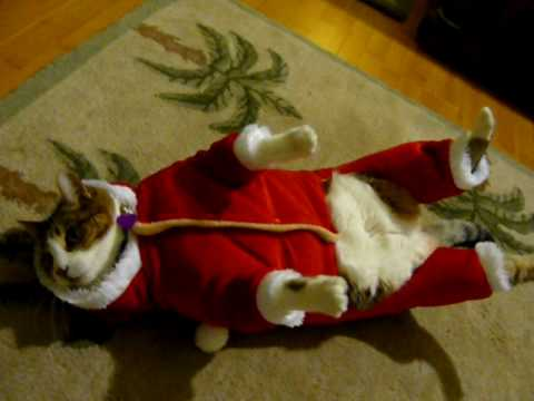 Fat Cats Awesome Photographs - Pets Cute and Docile