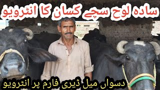 Daswan mile dairy farm||How to start dairy farm business in Pakistan || Dairy farming in Pakistan
