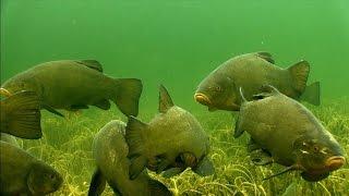 Подводная охота на РАССЛАБОНЕ | Много линя