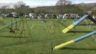 Scandal Uk Agility Show And Training