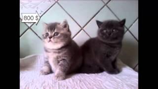 For sale продажа котят