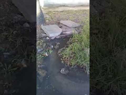 Berazategui: 2 meses de desborde cloacal en 111 entre 7 y 8