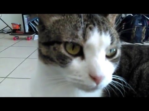 Adobe Premiere Clip on the Cell 'cat video' editing test