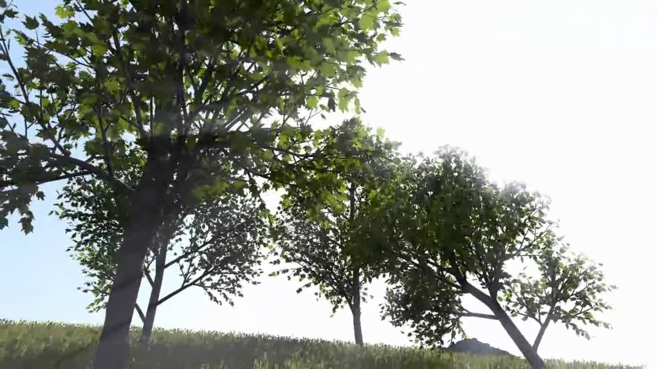 3d Tree Live Wallpaper Real Time Rendering And Animation Of Trees Youtube