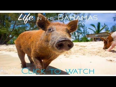 Life In the Bahamas