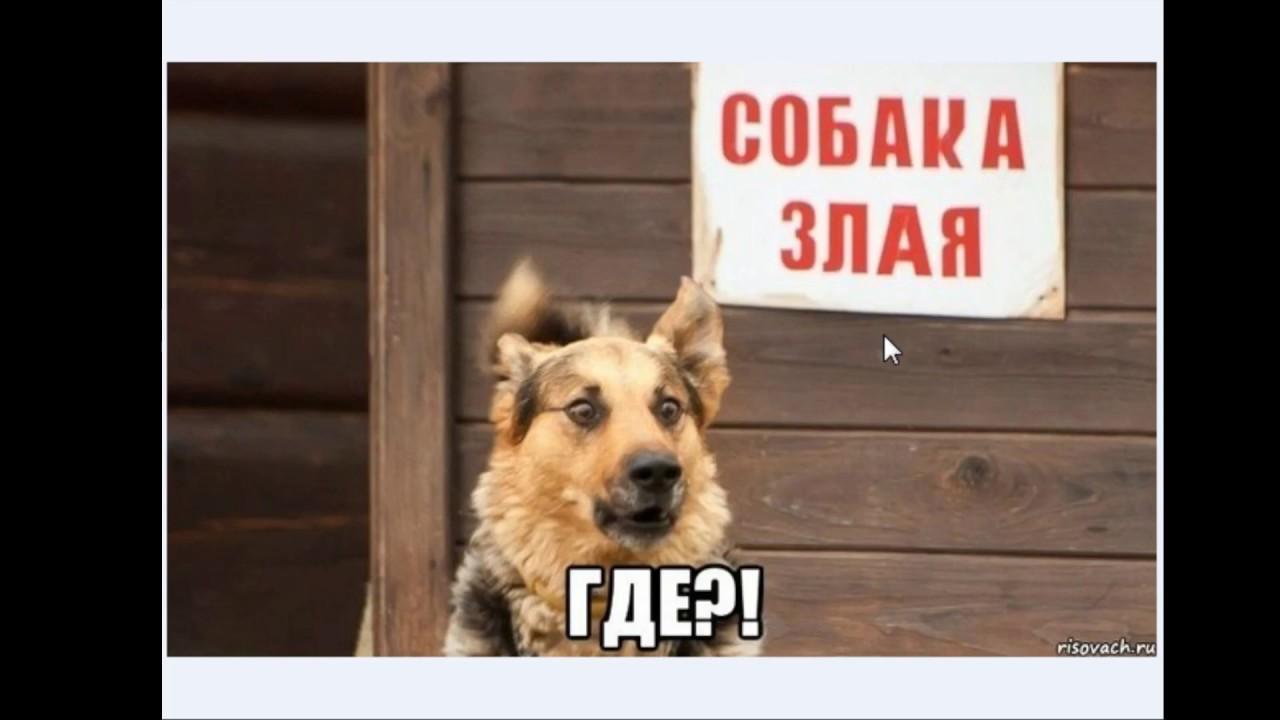 Злая собака картинки юмор