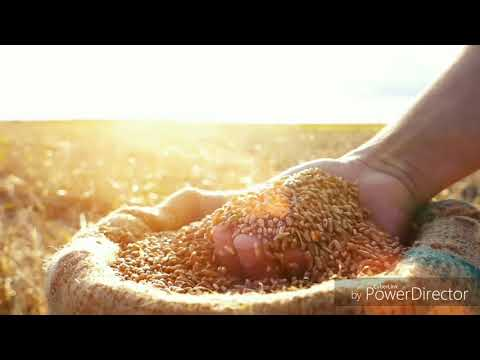 PANI RE PANI C.G. || दिल को छू लेने वाला वीडियो || Singer- Kantikartik Yadav || Fan_Made_Video