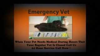 Emergency Vet Houston - (713) 489-8411 - Best Emergency Vet Houston