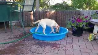 Maddie trying to fill up her pool
