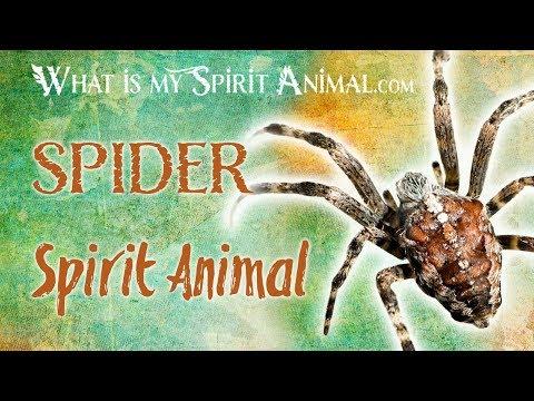 spider-spirit-animal-|-spider-totem-&-power-animal-|-spider-symbolism-&-meanings