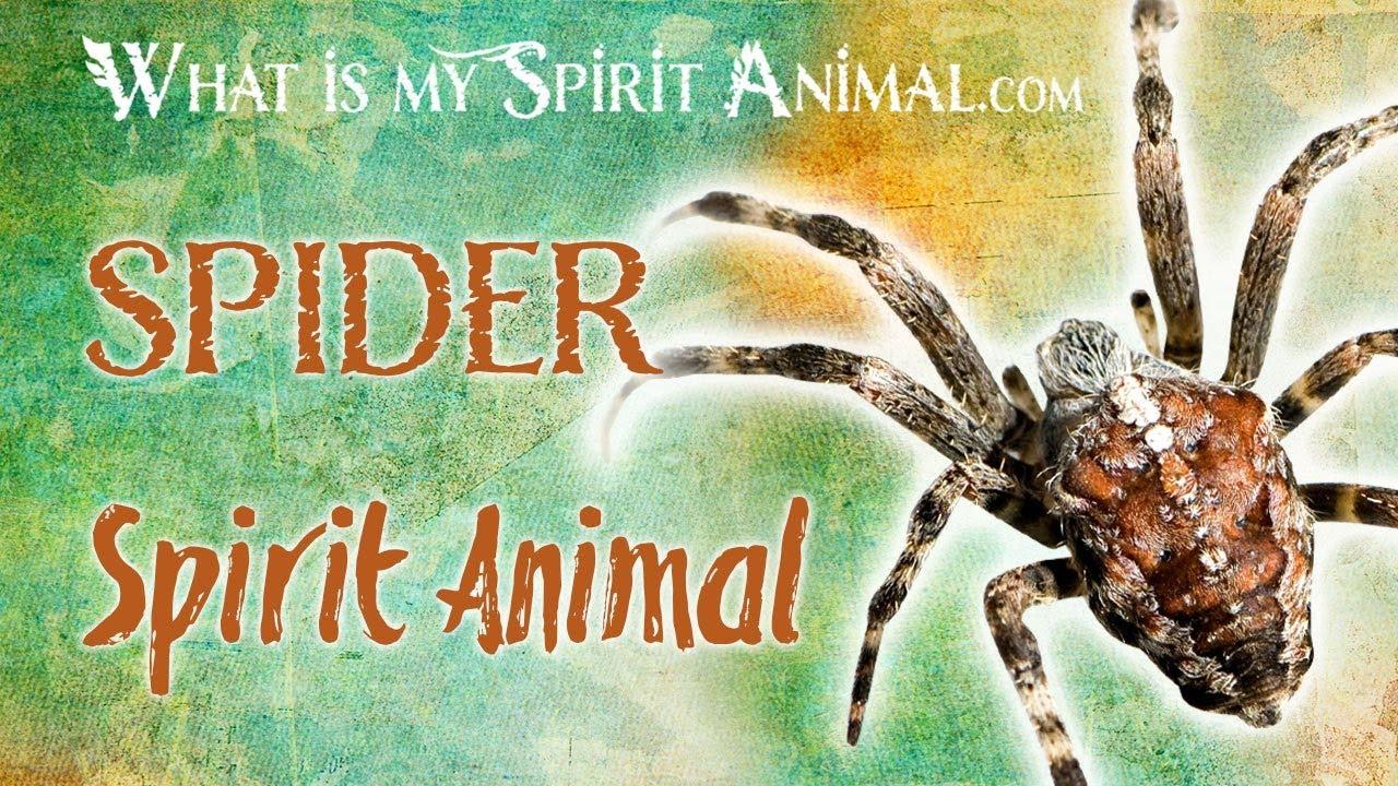 Spider Symbolism & Meaning | Spirit, Totem & Power Animal